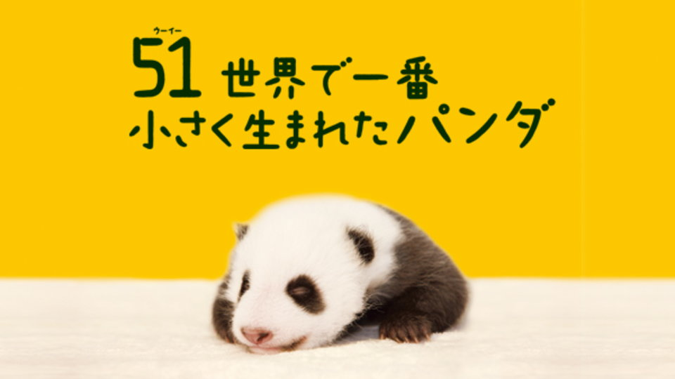 51(ウーイー)世界で一番小さく生まれたパンダ のサムネイル画像