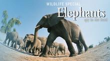 スパイカメラ! ゾウ達の知られざる素顔 のサムネイル画像