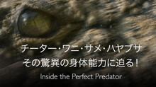 チーター・ワニ・サメ・ハヤブサ その驚異の身体能力に迫る! のサムネイル画像