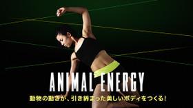 動物の動きが、引き締まった美しいボディをつくる! ANIMAL ENERGY のサムネイル画像