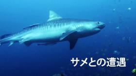 サメとの遭遇 のサムネイル画像