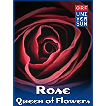 ROSE - QUEEN OF FLOWERS のサムネイル画像