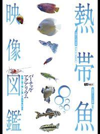 シンフォレスト 熱帯魚映像図鑑 バーチャル・アクアリウム のサムネイル画像