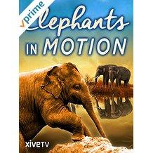 ELEPHANTS IN MOTION のサムネイル画像