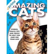 Amazing Cats のサムネイル画像