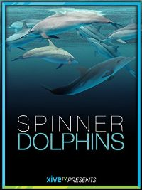 SPINNER DOLPHINS のサムネイル画像