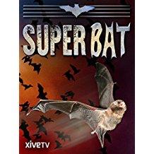 Super Bat のサムネイル画像