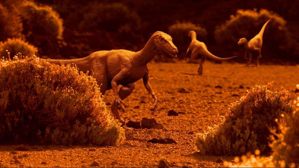 動物たちの進化の謎に迫る のサムネイル画像