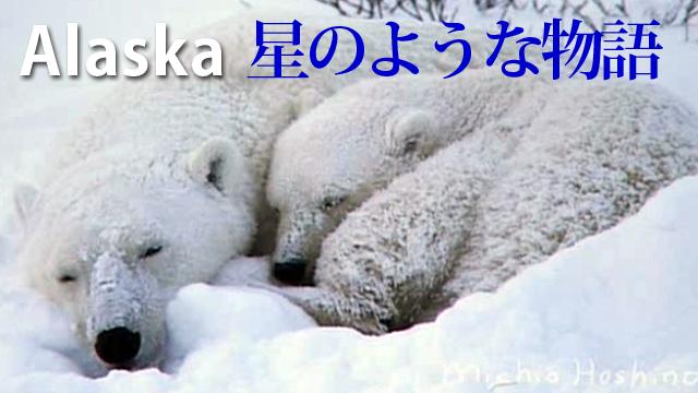 Alaska 星のような物語 ~写真家・星野道夫 はるかなる大地との対話~ のサムネイル画像
