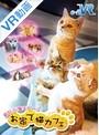 【VR】 お家で猫カフェ のサムネイル画像