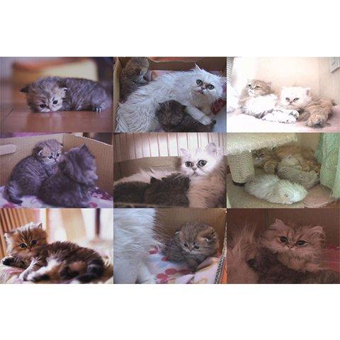 Cat Healing ねこちゃんといっしょ のサムネイル画像