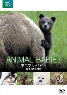 BBC earth アニマル・ベビー ~野生の成長物語~ のサムネイル画像