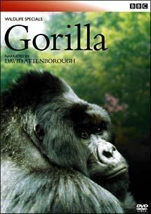 BBC ワイルドライフ・スペシャル ゴリラ 密林の王者 のサムネイル画像