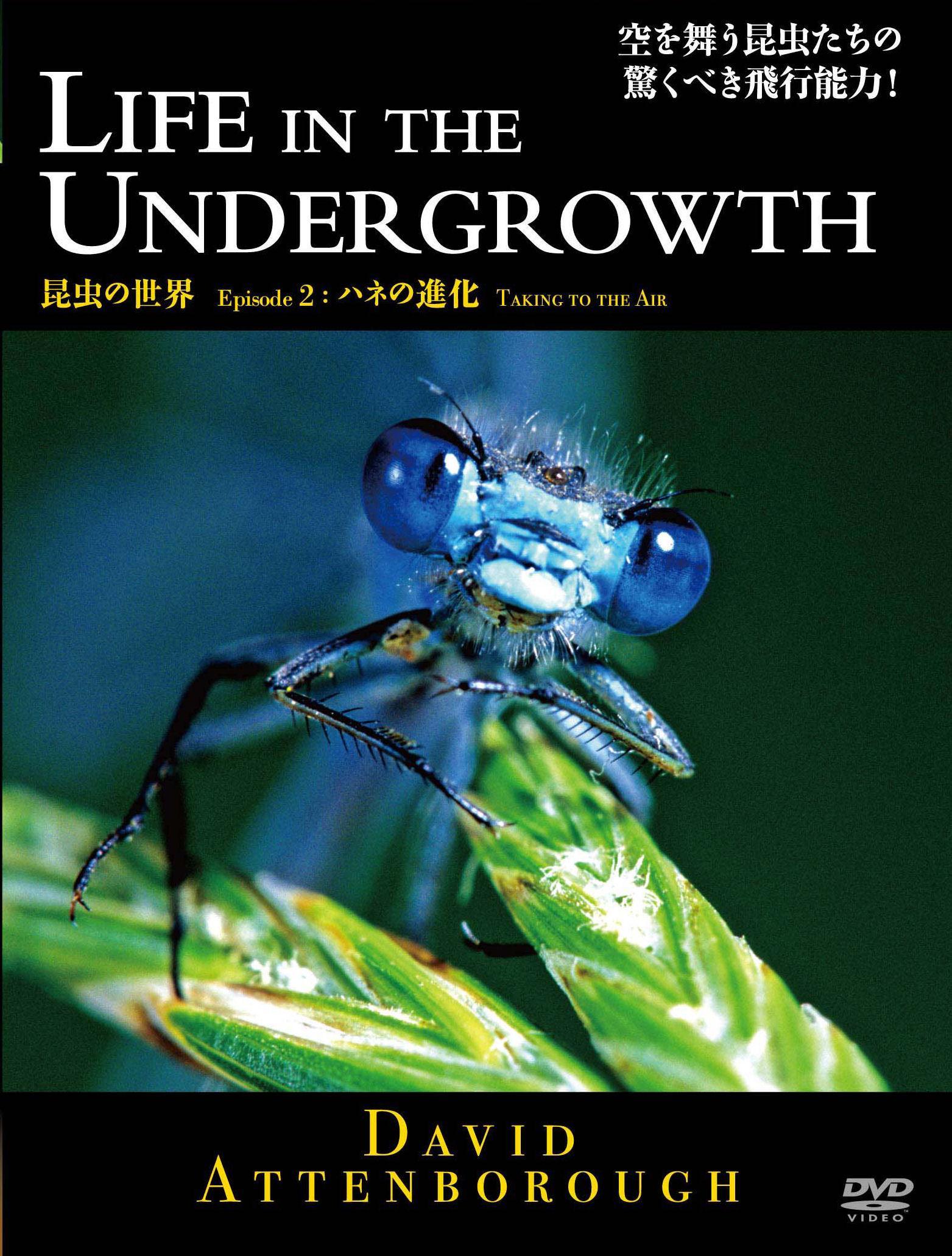 BBC 昆虫の世界 ハネの進化 2 のサムネイル画像